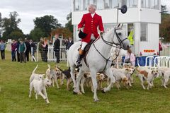 Hunts dogs and Master. WEEDON, UK - AUGUST 28: Huntsmen parade their dog pack to the watching crowd before letting the public into the arena to see the dogs Royalty Free Stock Photo
