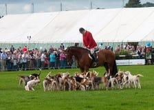 Huntsman e Hounds Fotografia de Stock Royalty Free