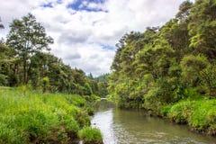 Hunua regionalności park Obraz Royalty Free