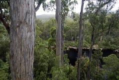 Huon River a regardé de l'airwalk de forêt de Tahune, Tasmanie, Australie Photos stock