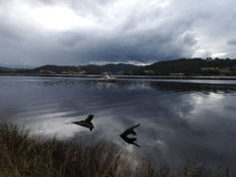Huon Valley, Tasmania Royalty Free Stock Photo