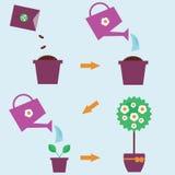 Hur man växer anvisningar för en växt vektor illustrationer
