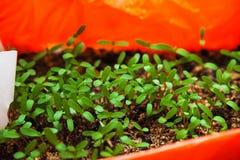 Hur växande plantor Fotografering för Bildbyråer