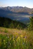 Huracán Ridge de las montañas olímpicas de la ladera de la cubierta de los Wildflowers Imagen de archivo