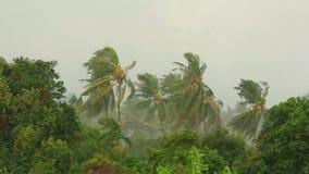 Huracán tropical de la tormenta en la selva en la KOH almacen de video