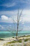 huragan drzewo Fotografia Royalty Free