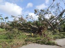 Huragan szkoda Irma Zdjęcie Stock