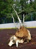 huragan w Moskwa Zdjęcie Stock