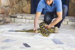 HURGADA, EGYPT - JUNE 23, 2015: Spotted pithon is taken by a man in the street. Safety from reptiles.  Royalty Free Stock Image