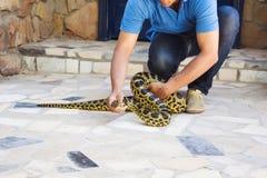 HURGADA, EGYPTE - 23 JUIN 2015 : Le pithon repéré est pris par un homme de la rue Sécurité des reptiles Image stock