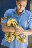 HURGADA, EGYPTE - 23 JUIN 2015 : Le pithon repéré est pris par un homme de la rue Sécurité des reptiles Photographie stock