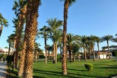 HURGHADA, ÄGYPTEN - 14. OKTOBER 2013: Schöne Palmen in einem tropischen Luxushotel auf den Ufern des Roten Meers Lizenzfreies Stockbild