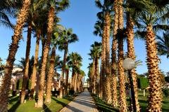HURGHADA, ÄGYPTEN - 14. OKTOBER 2013: Schöne Palmen in einem tropischen Luxushotel auf den Ufern des Roten Meers Stockfoto