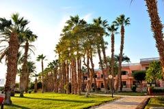 HURGHADA, ÄGYPTEN - 14. OKTOBER 2013: Schöne Palmen in einem tropischen Luxushotel auf den Ufern des Roten Meers Lizenzfreie Stockfotos