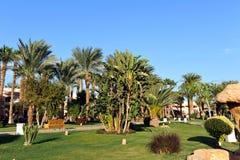HURGHADA, ÄGYPTEN - 14. OKTOBER 2013: Schöne Palmen in einem tropischen Luxushotel auf den Ufern des Roten Meers Stockfotos
