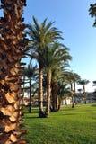 HURGHADA, ÄGYPTEN - 14. OKTOBER 2013: Schöne Palmen in einem tropischen Luxushotel auf den Ufern des Roten Meers Stockfotografie
