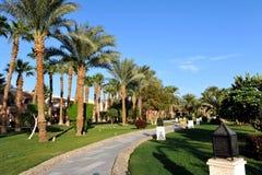HURGHADA, ÄGYPTEN - 14. OKTOBER 2013: Schöne Palmen in einem tropischen Luxushotel auf den Ufern des Roten Meers Lizenzfreie Stockbilder