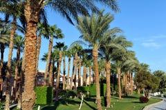 HURGHADA EGIPT, PAŹDZIERNIK, - 14, 2013: Piękni drzewka palmowe w tropikalnym luksusowym hotelu na brzeg Czerwony morze Obraz Stock