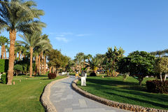 HURGHADA, EGITTO - 14 OTTOBRE 2013: Belle palme in un albergo di lusso tropicale sulle rive del Mar Rosso Fotografia Stock Libera da Diritti