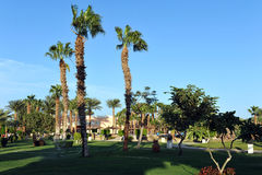 HURGHADA, EGYPT - OCTOBER 14, 2013:Beautiful palm trees in a tropical luxury hotel on the shores of the Red Sea Stock Photography