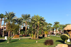 HURGHADA, EGYPT - OCTOBER 14, 2013:Beautiful palm trees in a tropical luxury hotel on the shores of the Red Sea Stock Photos
