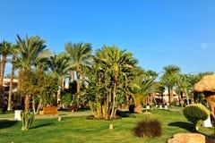 HURGHADA, EGYPTE - 14 OCTOBRE 2013 : Beaux palmiers dans un hôtel de luxe tropical sur les rivages de la Mer Rouge Photographie stock