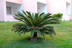 HURGHADA EGYPTEN - OKTOBER 14, 2013: Härliga palmträd i ett tropiskt lyxigt hotell på kusterna av Röda havet Arkivfoton