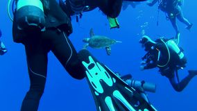 Crowd of divers in the sea stock video footage
