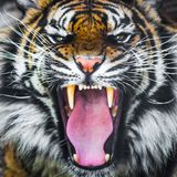 Hurlement de tigre grognant photographie stock libre de droits