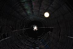 Hurlements de Spidy de pleine lune photo stock
