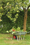 Hurley with cutting foliage under a tree Stock Image