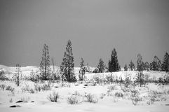 Huron λιμνών bw τοπίων δέντρων και αμμόλοφων χιονιού Στοκ Εικόνες