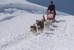 Hurray downhill. Internationaler Nockberge Longtrail in Innerkrems. Traditional sleddog race in Austria. Sleddog race in Innerkrems is a part of Iron Sled Dog Royalty Free Stock Photo