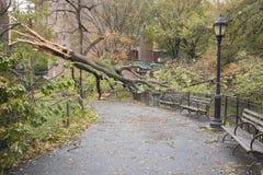 hurricane击倒的结构树桑迪,曼哈顿 免版税图库摄影