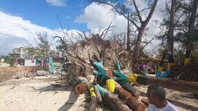 Hurricane damage. Palm tree uprooted by hurricane Matthew love beach stock images