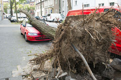 Hurricane damaged car. Car crashed from fallen tree during Hurricane in Dusseldorf, Germany royalty free stock photos