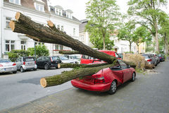 Hurricane damaged car. Car crashed from fallen tree during Hurricane Dusseldorf, Germany stock photo