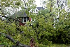 Hurricane Disaster. Several trees down in front of a house from Hurricane Ike Royalty Free Stock Image