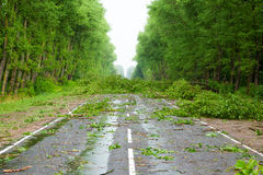 After hurricane. Fallen trees willow on road royalty free stock photo