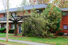 Hurricane  flood and wind damage. Tornado storm felled trees flooding Stock Photography