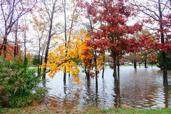 Hurricane  flood and wind damage. Tornado storm felled trees flooding Royalty Free Stock Photos