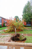 Hurricane  flood and wind damage. Tornado storm felled trees flooding Royalty Free Stock Image