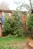 Hurricane  flood and wind damage. Tornado storm felled trees flooding Stock Photos