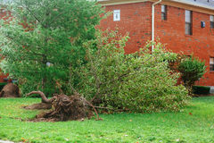 Hurricane  flood and wind damage. Tornado storm felled trees flooding Stock Images
