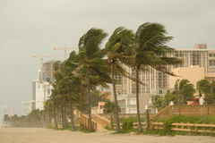 Hurricane Gusts. Impact of Hurricane force winds from Gustav hit Florida Beach causing swirling sands and palm trees to sway. View of Highrises and contruction royalty free stock photography