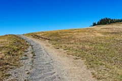Hurricane Hill Trail. The Hurricane Hill Trail in Olympic National Park, Washington Stock Images