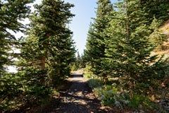 Hurricane Hill Trail. The Hurricane Hill Trail in Olympic National Park, Washington Stock Photos