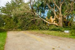 Hurricane Irma Aftermath Royalty Free Stock Photo