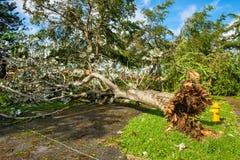 Hurricane Irma Aftermath Stock Photo