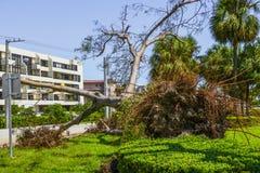Hurricane Irma Damage. Beach, Florida, Palm beach Stock Images